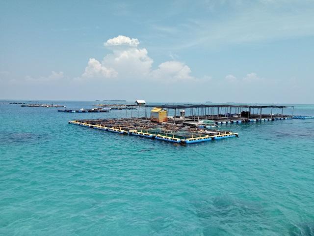 Kunjungan Direktur Perbenihan DJPB KKP ke Balai Sea Farming PKSPL-IPB