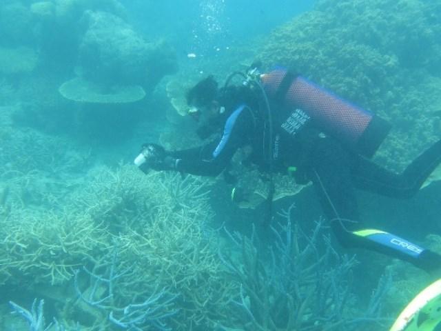 Monitoring Transplantasi Terumbu Karang di Pulau Nyamuk, Kepulauan Anambas
